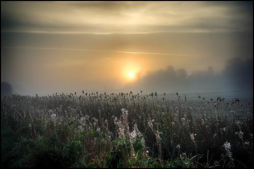 morning light mist fog sunrise 35mm landscape sweden sony fe za f28 svergie soluppgång morgon landskap dimma ljus savetheworld lindome a7r mystiskt ilce7r