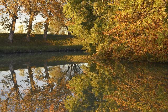 Les platanes du Canal du Midi