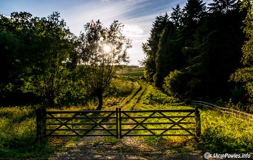 sunset gate flickr