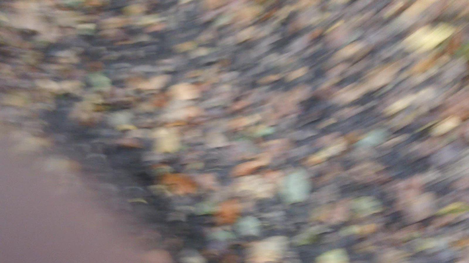Sandstone cutting near Hoath Farm (video) Spookily off-kilter movie! .Just click on arrow!