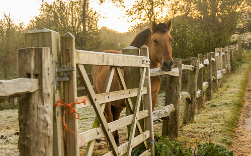 horse nature animal sunrise canon fence wildlife canon60d pwphotography