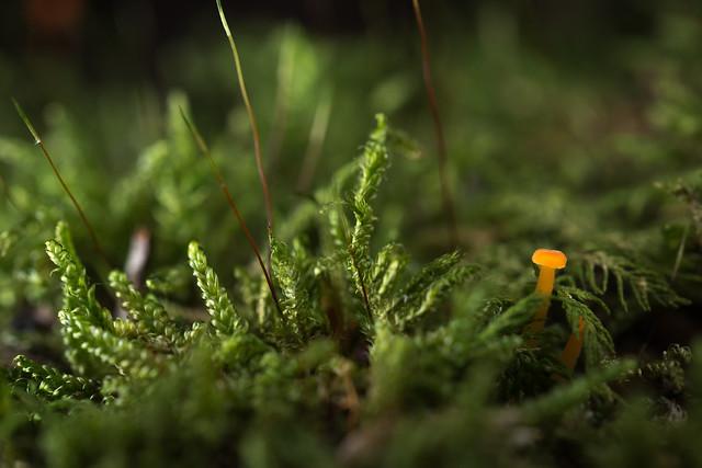 Hide in the moss - Caché dans la mousse