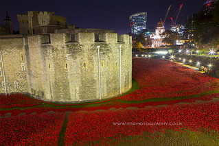 Poppies at The Tower of London to remember every one who lost their live in WW1. London at Night | by iesphotography