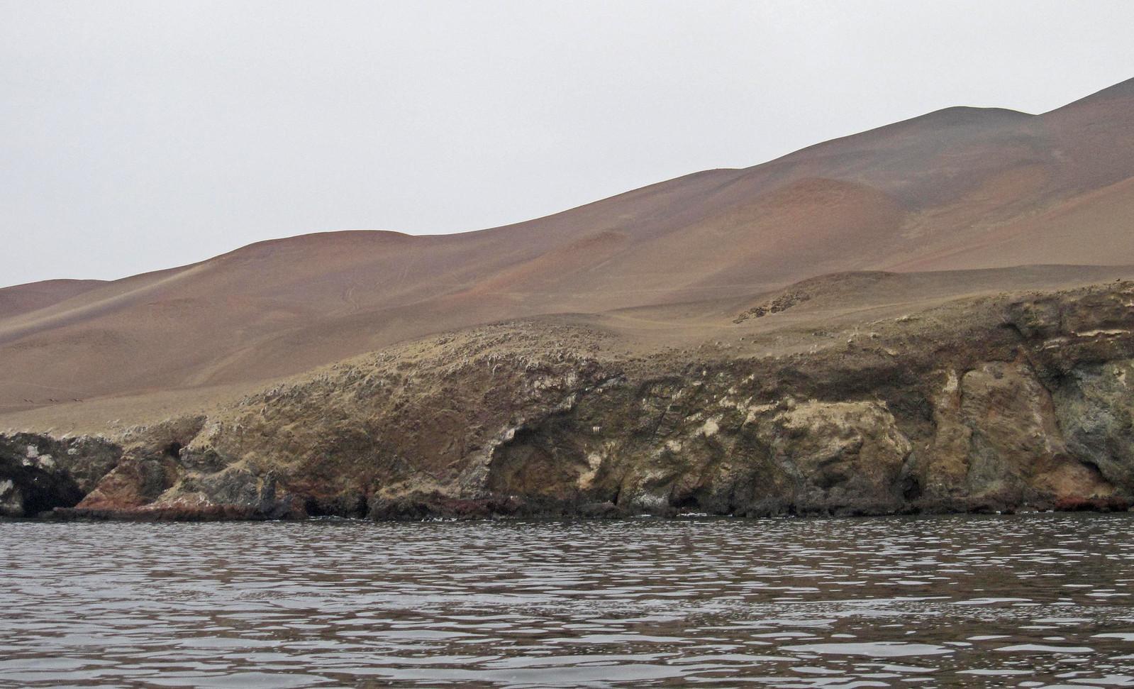 a Islas Ballestas 18