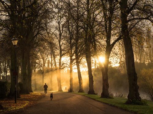 morning trees mist sunrise dawn shropshire riverside path walk olympus shrewsbury avenue limes em1