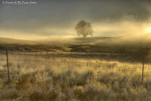 light mist field silhouette fog clouds sunrise fence colorado cottonwood berthoud agriculture frontrange highlight johnstown weldcounty