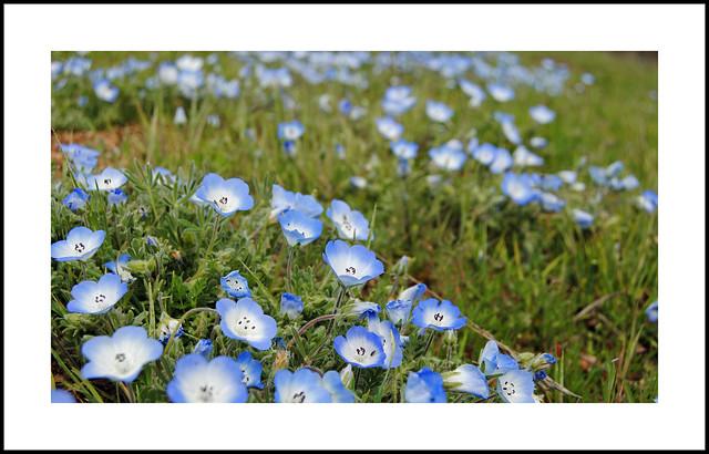 Walker Basin Wildflowers