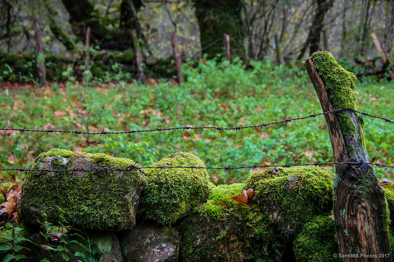 Alambradas de espino