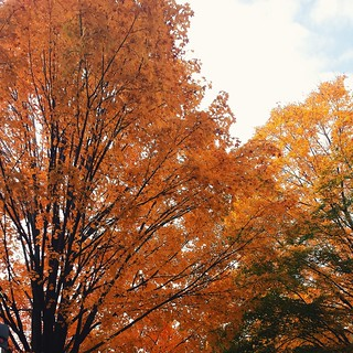 my favorite shade of tree | by rachellake