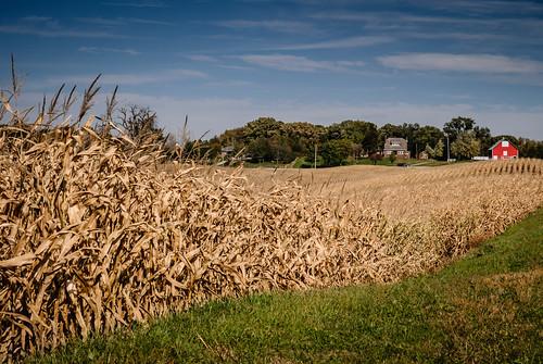 autumn barn corn country countryside fall field harvest iowa laughlinc lightroom lightroom5 nikon1755mm24 nikond80 redbarn rural nikon