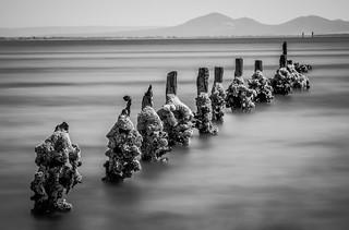 Salty Sentinels