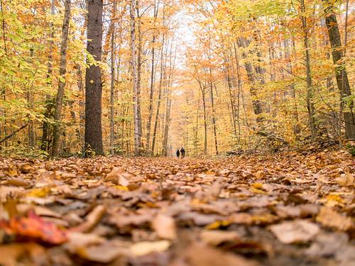 fall walkway | by ekonon