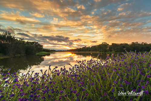 reflection sunrise weeds nikon westernaustralia d800 baldivis pattersonscurse wellardwetlands nikon1424mmf28 nikond800