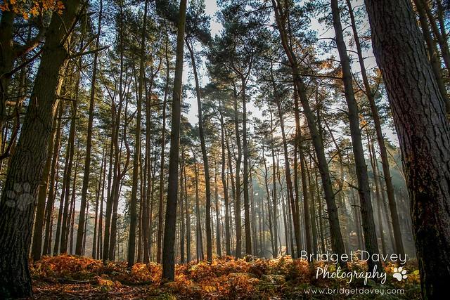 Rushmere Country Park | Leighton Buzzard, Bedfordshire