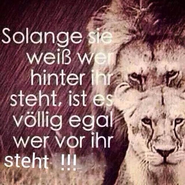 So Ist Es Tiger Lion Zitate Sprüche Löwe Inspiratio