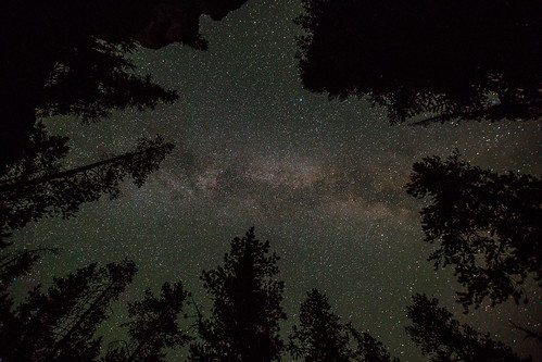 Milky Way and lodgepole pines   by YellowstoneNPS