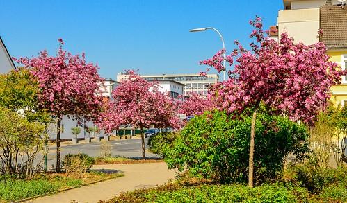 Frühling an der Ecke Bahnhofstraße / Hugenottenallee.