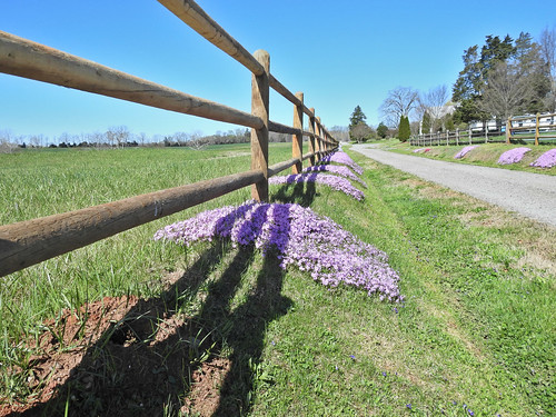 libertycornerfarm albemarle virginia landscape groundcover fence farm farmland farmfield flowers trees blooms spring april grass