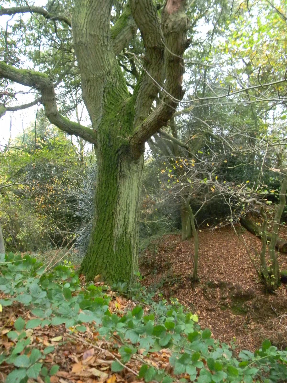 Tree, dip 'n' leaves Milford to Godalming