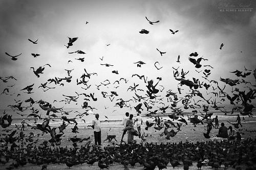 MUMBAI   by Amlan Sanyal