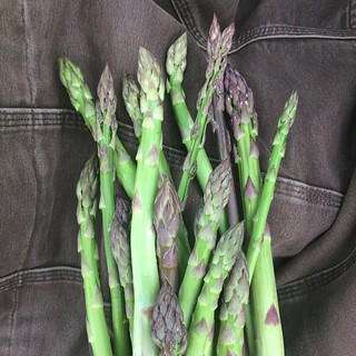 The asparagus corms we got from @radicalrootfarm a few years ago have finally worked through our management system (utter neglect). Yum. @breslinfarms #organic #asparagus #spring | by cheeses