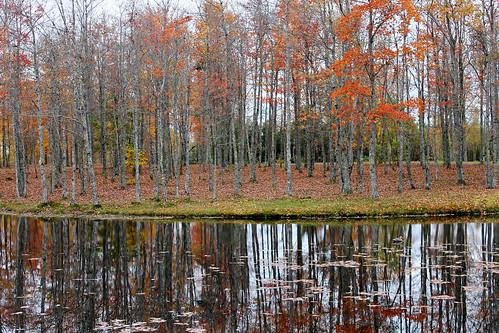 autumn trees canada nature leaves canon reflections landscape pond colours seasons country fallfoliage newbrunswick colourful maples charlottecounty