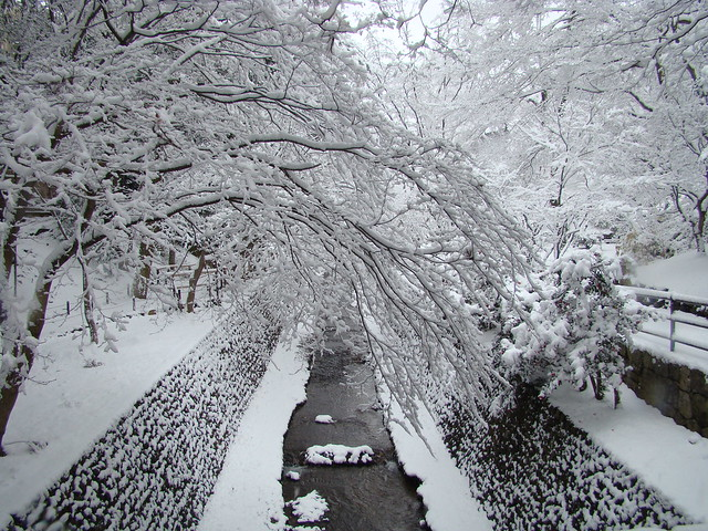 First Snow in Kyoto