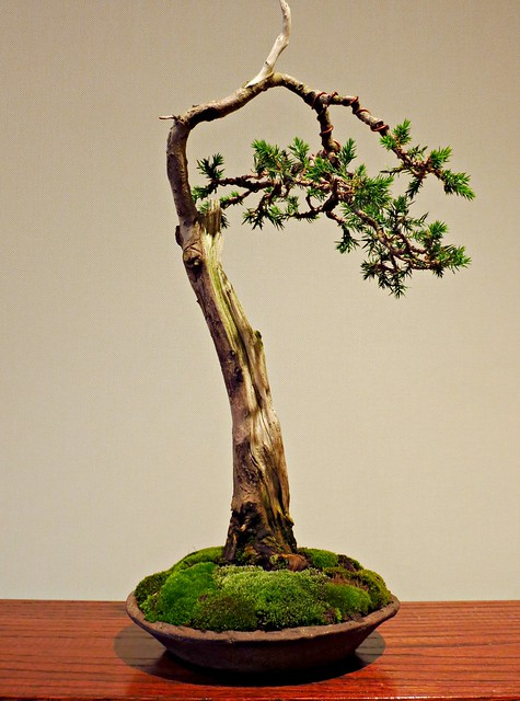 Shohin, Miniature Bonsai, Bonsai Show, Toronto Botanical Garden, Toronto, ON