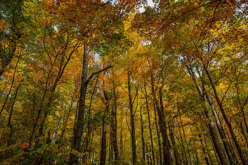 autumn fall kentucky ky berea bereaforest