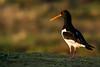 Seaside bird by Pascal Bernardin