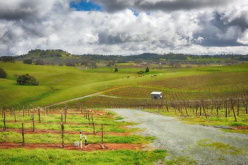 farm landscape winetasting amadorcounty california shenendoahvalley