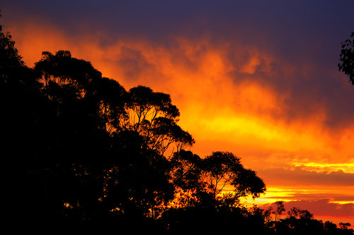 sunset trees red orange outdoors australia hdr canon60d photomatix sky