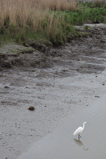 Launceston - Egret at Tamar Island | by minuseleven