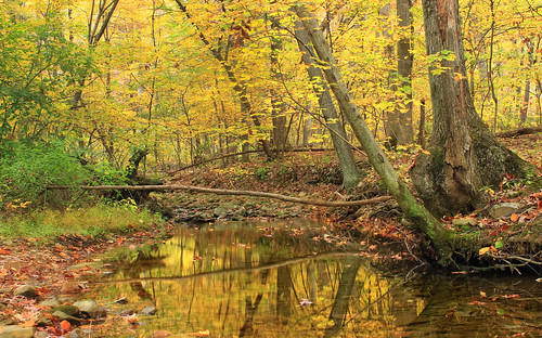 autumn trees nature creek forest stream hiking pennsylvania foliage creativecommons deciduous lehighvalley riparian leaflitter understory northamptoncounty jacobsburgstatepark jacobsburgenvironmentaleducationcenter temperatedeciduousforest englersrun