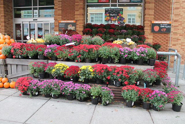 21.Autumn.WholeFoods.1440P.NW.WDC.14October2014