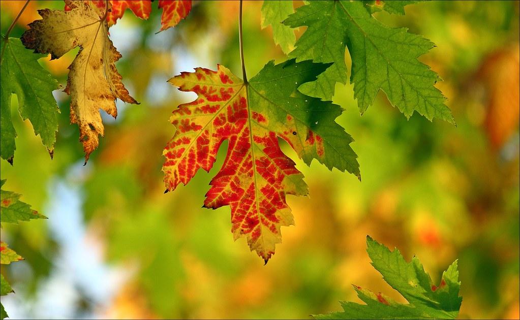 Autumn Is Slipping Away