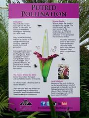 Putrid Pollination