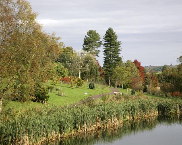 Bedgebury Pinetum