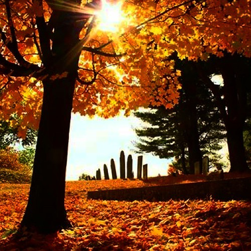 autumn trees orange sun fall nature colors cemetery rural landscape massachusetts country newengland fallfoliage uploaded:by=instagram