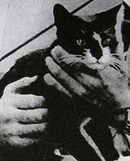 El gato Oskar