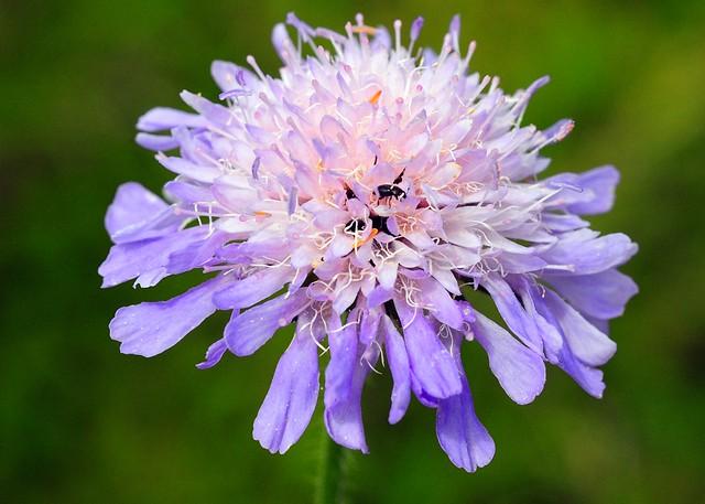 Bloom with beetles