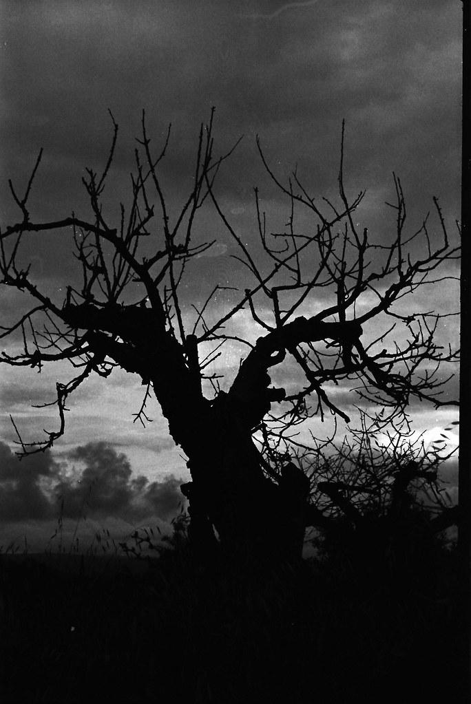 Contre Jour Noir Et Blanc Jo Seppy 1 S Film Tmax 400 Dev T