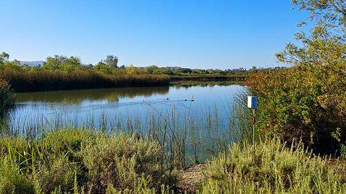sanjoaquinwildliferefuge irvine california photo digital spring morning pond lake wetland