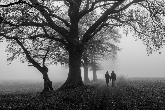 Dans la brume Explored 2016-12-18