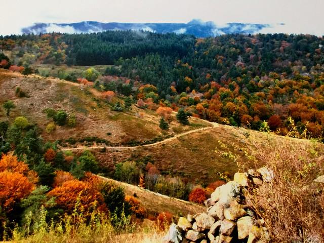 H.  Ardeche au pied du mont Gerbier de Jonc France !!!🐂🐐