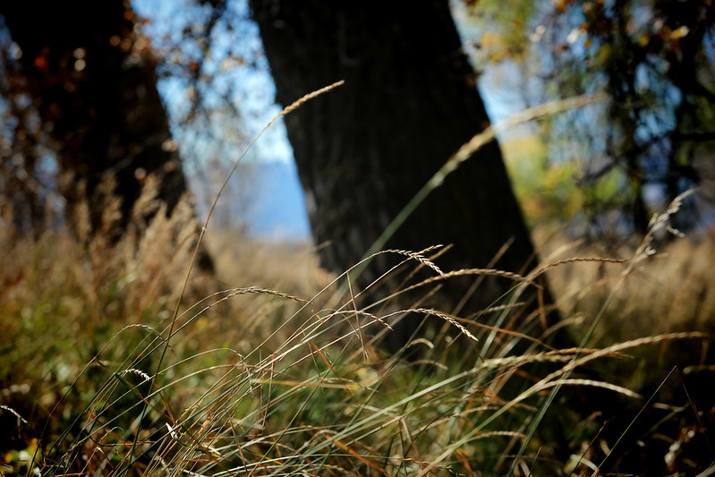 2014 10 25 - Grass and Trees - DMTI - 9S3A3757