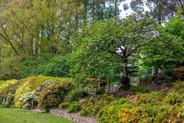 National Rhododendron Garden, Mt. Dandenongs