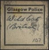 Wild cat hair label