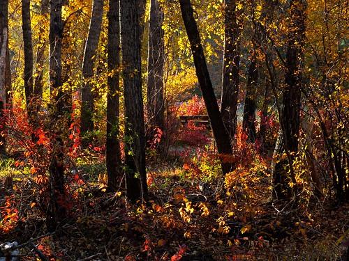 autumn canada tree calgary fall herbst alberta