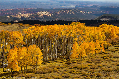 Boulder Mountain Fall Color | by IntrepidXJ